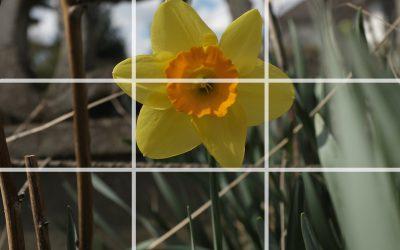 einfach besser fotografieren – Bildkomposition